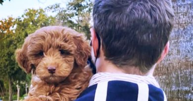 General Hospital (GH) Spoilers: Wes Ramsey Recognizes National Puppy Day With Puppy Kimba